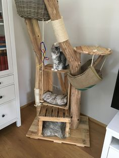 Satisfied purrs - natural wood trees for cats - Satisfied purrs – natural wood trees for cats tree scratching post trees - Outdoor Cat Enclosure, Diy Cat Tree, Cat Playground, Cat Room, Outdoor Cats, Pet Furniture, Wood Tree, Diy Stuffed Animals, Natural Wood
