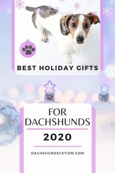 Dachshunds Love These Toys! Interactive dog toys and doggie IQ puzzles are a great way to help your dachshund stay mentally stimulated. Dachshunds were originally bred to hunt, so they love to sniff out and search for hidden items. Best Holiday Gifts For Dachshunds. Best interactive dog toy for dachshunds.  #dachshund  #doxie