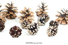 How to Clean Pine Cones for Crafts – Sustain My Craft Habit Mesh Christmas Tree, Christmas Pine Cones, Christmas Crafts, Pine Cone Art, Pine Cone Crafts, Pine Cone Decorations, Christmas Decorations, Wedding Crafts, Wedding Decor