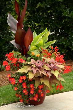 Graceful Containers - Ingredients: Canna 'Australia', Canna 'Tropicanna Gold', Infinity Orange New Guinea Impatiens, 'Hot Shot' Orange portulaca, Begonia boliviensis Bonfire, 'Orange Marmalade' Crossandra, Sweet Caroline Bronze sweet potato vine.