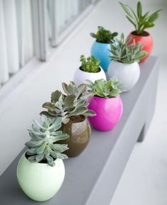 These could be good for a low-maintenance herb garden. Guaranteed Green: Self-Watering Planters **I love plants! Succulent Pots, Cacti And Succulents, Planting Succulents, Planting Flowers, Succulent Display, Plant Pots, Herb Garden, Indoor Garden, Indoor Plants