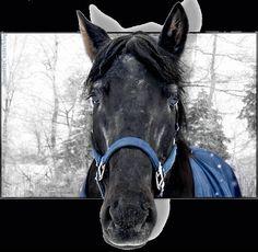 Immagini animali - ilmiosognoceleste2