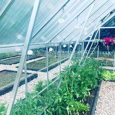W mojej szklarni rosną pomidory, papryka, ogorki i sałata. Nie może zabraknąć również kwiatów, które pieknie ozdabiają wnętrze