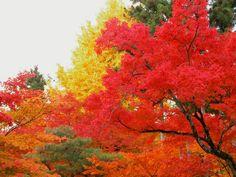 京都  永観堂。紅葉のボリュームがすごい。