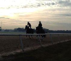 Sunrise at Tampa Bay Downs!