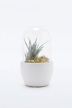 """Urban Grow – Kleines Terrarium """"Mini Pill"""" in Weiß - Urban Outfitters 52€"""