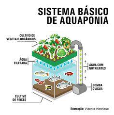 Integrar criação de peixes com hortaliças economiza 90% de água e elimina químicos - Portal Embrapa