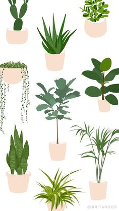 Save this beginner's guide to trendy indoor plants to learn all the tips and tricks — including how much sun + water — every plant needs so you keep them alive and your space green. Let your indoor jungalow grow! Plant Illustration, Botanical Illustration, Sun And Water, Plant Drawing, Plant Art, Plant Needs, Houseplants, Amazing Gardens, Indoor Plants