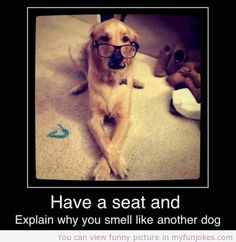 Dog cute! funny animal pictures  - http://www.myfunjokes.com/funny-animals/dog-cute-funny-animal-pictures/