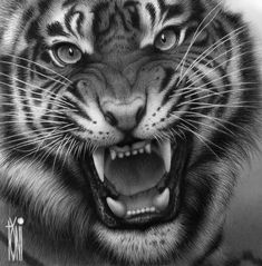 great Tiger by on DeviantArt - Tattoo Vorlagen Zeichnung Tiger Sketch, Tiger Drawing, Tiger Art, Big Tiger, Tiger Head Tattoo, Lion Head Tattoos, Cat Tattoo, Animal Paintings, Animal Drawings