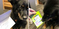 Sarge's coworkers wanted to make the pup feel special this year — and they succeeded.