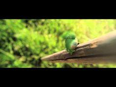 Mauno Mato - Rölli - YouTube Parrot, Bird, Animals, Youtube, Parrot Bird, Animales, Animaux, Birds, Animal