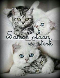 Samen