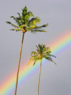 ✮ Hawaii, Maui - Rainbow cuts across gray sky behind two palm trees
