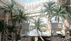 Image result for hire large palm