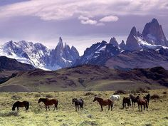 Patagonia, Argentina This is not so commonly known place for having the most dramatic and drastic landscapes on the planet. File:Cavalli Al Pascolo Ai Piedi Del Massiccio Del Fitz Roy, Patagonia.jpg