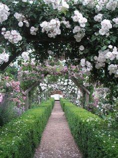 Mottisfont Abbey Garden...England