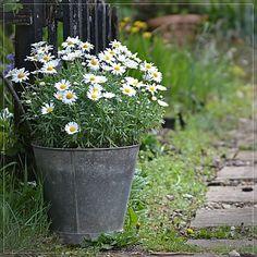vintage zinc flower bucket