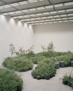 REPAIR by Baracco+Wright Architects in collaboration with Linda Tegg – mooool Contemporary Architecture, Landscape Architecture, Architecture Design, Contemporary Art, Onofre, Catwalk Design, Venice Biennale, Plant Art, Design Museum
