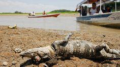 ICYMI: Terrorífico: caimanes y reses mueren por decenas en Brasil (video fuerte)