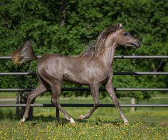 Bellatrix AP | Lyday Farms