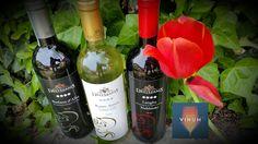 ...sapore di Vinum! - http://www.cantinadestefanis.com/sapore-di-vinum/