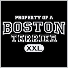 Property Of A Boston Terrier - Tee Shirt – Pawz Imprints #BostonTerrier