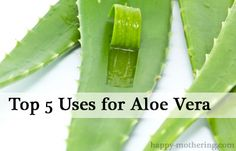 Top 5 Uses for Aloe Vera Gel