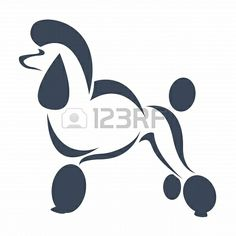 an dog  poodle  on white background  Stock Photo - 17681973