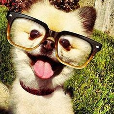 A very stylish selfie that's ready for Instagram. #dogs #selfies