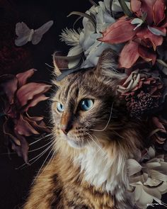 Style File, Art Mood, Facade Love, Paris. 𝒟𝒶𝒾𝓁𝓎 𝐼𝓃𝓈𝓅𝒾𝓇𝒶𝓉𝒾𝑜𝓃. | Cool Chic Style Fashion Tier Wallpaper, Animal Wallpaper, Most Beautiful Animals, Beautiful Cats, Baby Animals, Cute Animals, Tier Fotos, Cat Art, Animal Photography