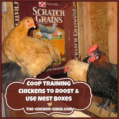 Coop Training Chickens to Roost & Use Nest Boxes