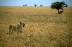 Serengeti- THIS IS MY #1 DREAM DESTINATION