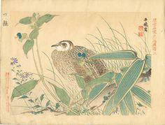 "Ukiyoe original hanga Woodblock print antique Miyake Gogyo  ""Bamboo Japanese quail"""