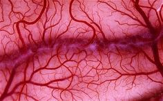 Off-the-shelf blood vessels that could revolutionise heart surgery have been developed by scientists. Fractal Patterns, Patterns In Nature, Fractal Art, Fractals, Science Gallery, Pseudo Science, Cord Blood Banking, Science Facts, Blood Vessels