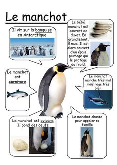 Winter Activities, Science Activities, Science Projects, French Education, Kids Education, Alternative Education, Polar Animals, French Classroom, French Resources