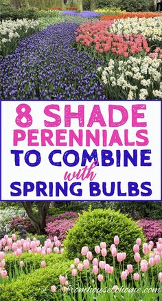 I'm always looking for plant combinations that will look good in my garden. These shade perennials are beautiful and will look great with the tulips in my spring garden!