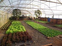 Enslin Aquaponics South Africa Farm Gardens, Aquaponics, Homesteading, South Africa