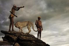 Fearless: Two hunters from an ancient tribe look unconcerned as they use a bow and arrow to catch their dinner - just yards from a fully grown cheetah