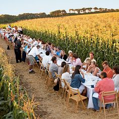 That is so cool.  It would be so much fun to have a feast in the middle of a corn field.  I guess I need to get planting!