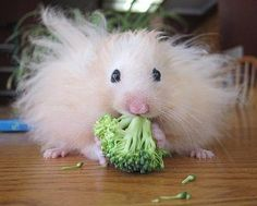 19 Hamsters Who Know Exactly How You Feel About Food (via BuzzFeed)