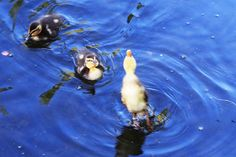Bugly Ducklings <3