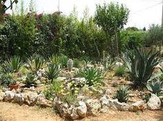 Risultati immagini per giardino roccioso per piante grasse