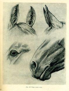 Сообщество иллюстраторов / Кочетова Татьяна / Как рисовать лошадь...
