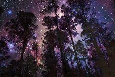 Starry Woods