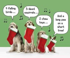 If you love a Christmas Dog meme, we've rounded up the best from the Internet that show off our canine friends' true feelings about the festive season! Christmas Dog, Christmas Humor, Christmas Ideas, Christmas Carol, Christmas Wishes, Vintage Christmas, Merry Christmas, Funny Dogs, Funny Animals