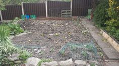 Potato patch with cabbages and beans