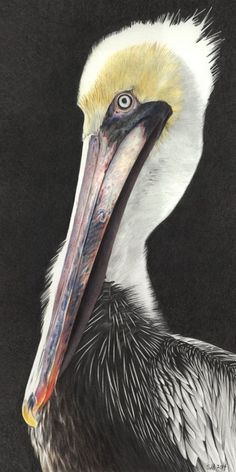 The Off-season by Sue deLearie Adair Colored and Graphite Pencils ~ x Watercolor Paintings Abstract, Watercolor Bird, Watercolor Artists, Watercolor Portraits, Watercolor Landscape, Pelican Art, Pelican Drawing, Art Viewer, Mobile Art