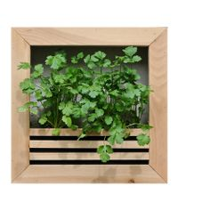 Get your own GARDEN WALL PLANTER!  This is a very versatile planter. You can grow anything from cilantro and mint, to peppers and strawberries! Put it on your kitchen wall for an easy-to-reach organic produce department.