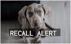 2/19/17 A voluntary recall has been announced by Against The Grain Pet Food, pertaining to a certain lot of Pulled Beef with Gravy Dinner for Dogs canned food, which was manufactured and distributed in 2015. The reason for the recall is the potential presence …